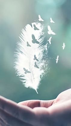 I do not own or claim any photo's music just sharing beautiful artwork and great music. Butterfly Wallpaper, Nature Wallpaper, Wallpaper Art, Feather Wallpaper, Amazing Wallpaper, Creative Photography, Nature Photography, Photography Lighting, Photography Backdrops