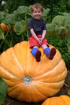 Now that's a pumpkin! *~*