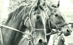 #Horses #Konie