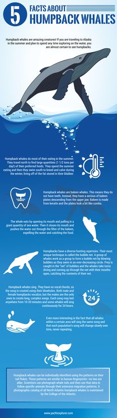 Humpback whales are quite intriguing in nature. Here are 5 facts that truly makes them so unique.