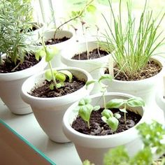 Container Gardening For Beginners Container Herb Garden for Beginners Gardening For Beginners, Gardening Tips, Best Herbs To Grow, Growing Herbs Indoors, Container Herb Garden, Inside Garden, Kitchen Herbs, Kitchen Ideas, Edible Plants