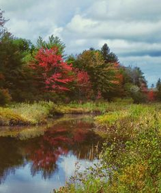 Title:Autumn Reflection; Artist Name:Elizabeth DeFeo; Description:Rich Fall colors reflected in still waters...; Art Form:Photography; Style:Photorealism; Media:Photography: Photographic Print; Genre:Nature