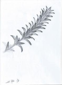 Sketch_Kelp3