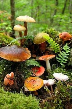 Mushroom garden ...fairy winkles....for those who believe;)