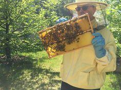 Der Imker himself - Bienenhaltung Imkerei Berlin Bienen Honig Imker Beekeeping