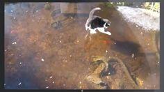 Fish Deep Trolling