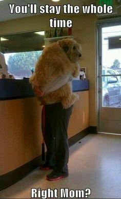 Hopefully that dog is light for the owner!