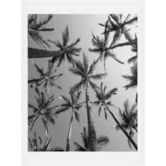 Lend a tropical touch to any space with this stylish print, featuring a palm tree design in black and white.  Product: Art print...