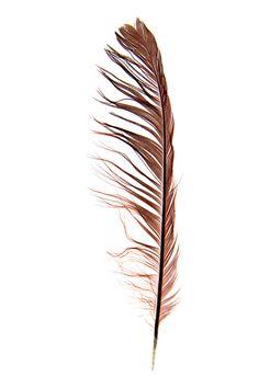 cardinal feather (mary jo hoffman)