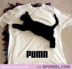 Haha funny cat there, is his name puma?