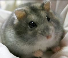 This looks exactly like my hamster Winter R.I.P.