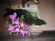Getting your orchids to bloom again!