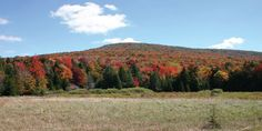 Autumn color paints the landscape at Canaan Valley National Wildlife Refuge  in Davis, WV. (U.S. Fish & Wildlife Service)