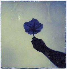 Masao Yamamoto - Artistic Photography - Subtile