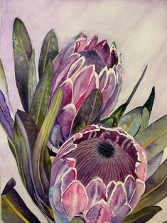 Flor Protea, Protea Art, Protea Flower, Acrylic Painting Flowers, Watercolor Flowers, Watercolor Cards, Watercolor Paintings, Watercolor Tattoos, Painting Prints