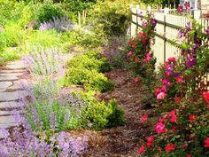 garden along fence - Google Search