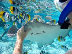#FrenchPolynesia #GoProFR #snorkeling #GoPro #underwater #GoProTravel #Travel #voyage