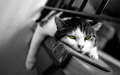 noir chatte photos HD mamans visages porno