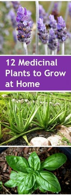 Gardening, home garden, garden hacks, garden tips and tricks, growing plants, gardening DIYs, gardening crafts, popular pin, medicinal…