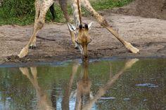 Fotopedia Magazine — From the Kalahari Desert to the Okavango Delta