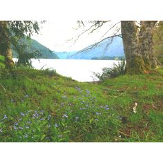 lake crescent, wa. between port angeles and forks.