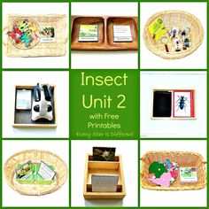 Insect learning activities and free printables for kids.