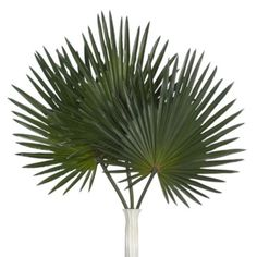 Palm Stem - Set of 3 from Z Gallerie