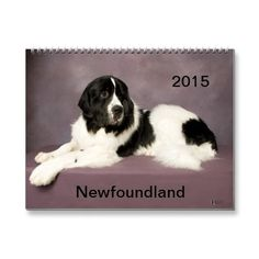 Newfoundland 2015 Calendar | Zazzle