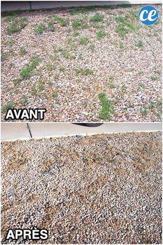 How to get rid of weeds growing in gravel Herb Garden, Vegetable Garden, Diy Videos, Weed Killer, Diy Garden Decor, Hacks Diy, Horticulture, Garden Inspiration, Gardening Tips