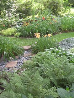 Dry Stream Bed with large stepping stones and dark river rock...love the ferns...cheap and easy to maintain....need to see if they are dog friendly!