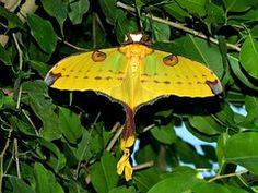 Drexel, Mariposa, Animales
