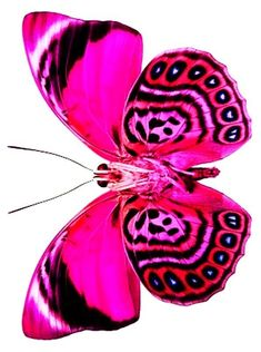 41 Ideas tattoo butterfly pink nature for 2019 Butterfly Drawing, Butterfly Painting, Butterfly Wallpaper, Butterfly Kisses, Pink Butterfly, Butterfly Wings, Pink Peacock, Types Of Butterflies, Flying Flowers
