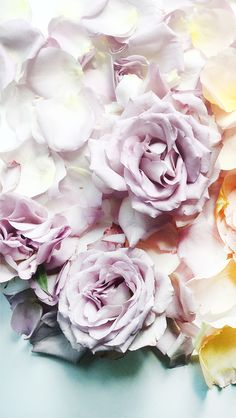 12 best floral screensavers for every month of the year images on