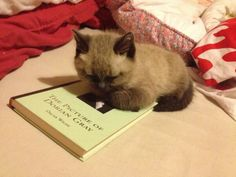 Nicola got in touch to show us this photo of her kitten (called Dorian Gray) reading his favourite book. By far the most highbrow picture of a tiny cat we've ever seen.