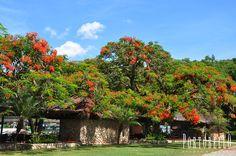 O dia amanheceu lindo aqui no Portobello Resort e Safári, ótimas energias para esse terça-feira ;) #Natureza #LugarDeSerFeliz