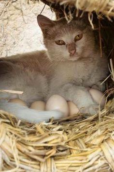 Resultado de imagem para สัตว์ ออกลูก เป็น ไข่