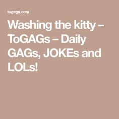 Washing the kitty – ToGAGs – Daily GAGs, JOKEs and LOLs!