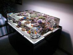 Infinity edge saltwater aquarium