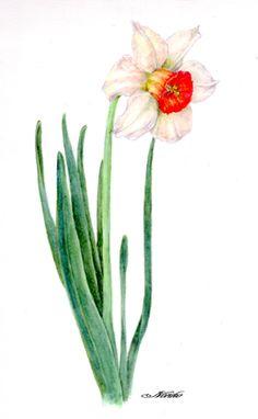 flowers paintings of daffodil -noriko hamakko