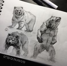 Art tutorials for all — anatoref: Bear by Aaron Blaise Animal Sketches, Animal Drawings, Cool Drawings, Drawing Sketches, Bear Instagram, Bear Sketch, Bear Art, Artist Canvas, Art Tutorials