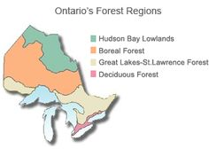 Map outlining Ontario's forest regions Map Outline, Hudson Bay, Forest School, Ontario, Presentation, School Resources, Canada