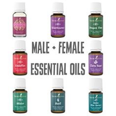 {Essential Oils} I'm sharing about these 8 oils on the blog! Our oil collection is great for infertility, but also for both male and female hormonal imbalances and overall health. {link in profile} #essentialoils #yleo #naturalhealth #induetimeblog