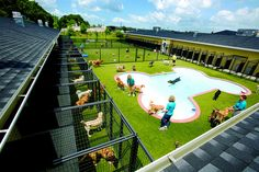 Pet Paradise Resort   Flickr - Photo Sharing!