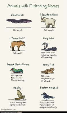 Animals with Misleading Names. King Cobra- Not a cobra. Also, snakes are typically self-governing. hahaha