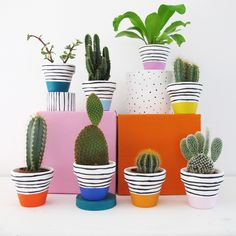 Can't decide which colours? That's ok, have them all!   Eight hand painted plant pots with colourful bases and stripy tops, perfect for mini cacti…