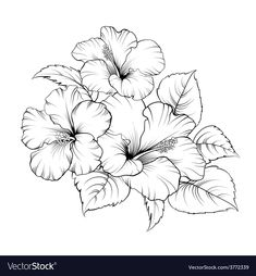 Most recent No Cost Hibiscus dessin Suggestions Increase tropical hibiscus pertaining to a major, striking appearance in your yard, terrace and also patio. Hibiscus Flower Drawing, Hibiscus Flower Tattoos, Flower Art Drawing, Pencil Drawings Of Flowers, Flower Sketches, Floral Drawing, Hibiscus Flowers, Art Sketches, Art Drawings