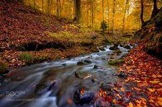 autumn by mehmet_emin_ergene via http://ift.tt/2rrOkwq