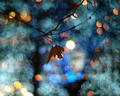 Bokeh Photography. Try it!
