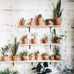 Succulent shelf perfection.   : @espaijoliu