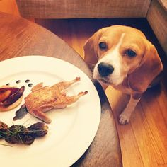 """Oh hello, little birdie.  #dinnertime"""